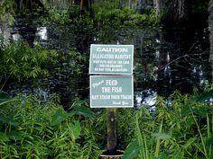 Alligator habitat sign in Cypress Lake on UL Lafayette campus