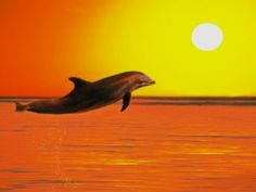 A dolphin jumps for joy at sunset. Photo: David Nardini/Getty Images