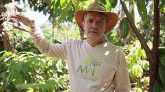 """O que é Agricultura Sintrópica? Prof. Marcio Armando- A sintropia, ao contrário da entropia, é um processo que vai do simples para o complexo."""" A Sintropia é quando o balanço energético é positivo, por exemplo na agricultura, quando o solo fica cada vez melhor, mais enriquecido com mais nutrientes."""