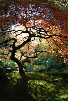 There's magic under a japanese maple.  Fairies just around the corner too.