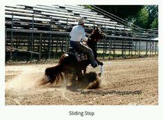 Versatile Arabian Horse. ©