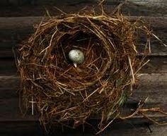 bird nest - Google-søgning
