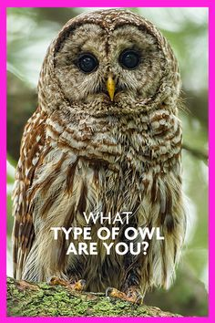 You must be a HOOT!