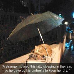 As someone this cat from the rain protected: | 28 Bilder, die zeigen, dass es 2015 auch gute Momente gab
