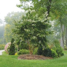 Small trees for garden, trees for front yard, front yards, garden shrubs, s Garden Shrubs, Garden Trees, Landscaping Plants, Front Yard Landscaping, Shade Garden, Landscaping Ideas, Acreage Landscaping, Landscaping Software, Backyard Patio