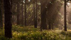 Metsä on aina ollut suomalaisille voiman, lohdun ja suojan paikka – ja on edelleen. Seuraavalla metsäretkellä etsi järeä kallio. Kiipeä sen päälle, valitse mukava paikka, levitä retkialusta kallion päälle ja käy selällesi. Rentoudu ja hengitä. Tunne, miten vakaa ja voimakas kallio kannattelee painosi kevyesti. Anna kallion ottaa vastaan kaikki mieltäsi painavat huolet, harmit ja ärsytykset. Se kyllä jaksaa ne kantaa 💚