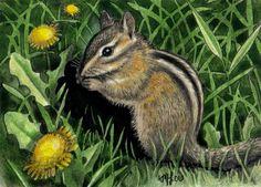 Chipmunk Art Melody Lea Lamb ACEO Print 360 by MelodyLeaLamb