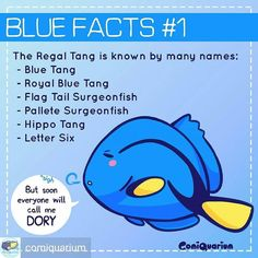 """Repost from @comiquarium -  Finding Dory is coming soon! So what better way to celebrate than to make the new series raising """"dory"""" awareness! The name """"hippo"""" comes from their scientific name """"hepatus"""" """"palette"""" because their marking resembles an artist's palette for painting and """"lettersix"""" is what we Indonesian call them in the market. And finally calling them 'blue tang' is confusing because another fish acanthurus coereulus is called the same name so best add """"regal"""" to avoid…"""