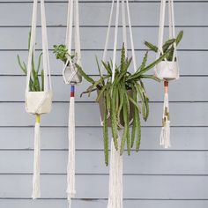 Little Feral Plant Hangers - Large Plant Hangers, Cotton Rope, Making Out, Neutral, Delicate, Simple, Green, Plants, How To Make
