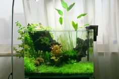 Low-fi aquarium. My next tank's going to be like this.