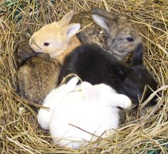 Angora rabbit color rainbow.  They even come in purple!  God is good!