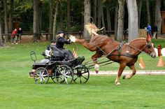 Horse harness |Horse Buggy Harness