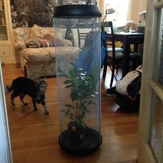 Our DIY chameleon cage!