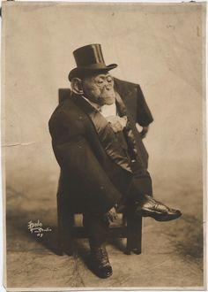 Chimpanzee Dressed in Tuxedo, c. 1920's