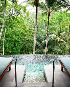 """Treetop daydreams from the warm plunge pool : @thetravelista #fourseasonssayan #balilife #lifeisgood"""
