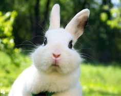 50 Cute Bunny Pictures | Cuded. THOSE CHEEKS.