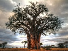 Baobab tree in Tarangire National Park, Tanzania - 7 Photography Myths Exposed Le Baobab, Baobab Tree, Tree Photography, Landscape Photography, Learn Photography, Digital Photography School, Exotic Places, Big Tree, Tree Forest