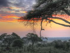 Tarangire sunrise | Flickr - Photo Sharing!