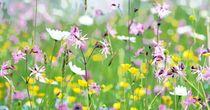 Plants, Mother Nature, Nice Asses, Photo Illustration, Planters, Plant, Planting