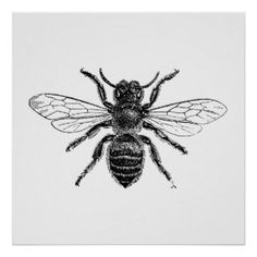 Bee Insect  - Vintage Engraving Posters
