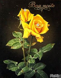 Rose Pictures, Pictures To Paint, Art Floral, Rose Drawing Tattoo, Colored Pencil Artwork, Montage Photo, Beautiful Flower Arrangements, Yellow Roses, Botanical Art