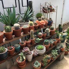 Doing some rearranging today! #cactuslover #cactuslove #cactusbloom #cactus #succulent #succulove #shelfie #succulentsunday