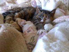 God I love how cats relax. - Imgur