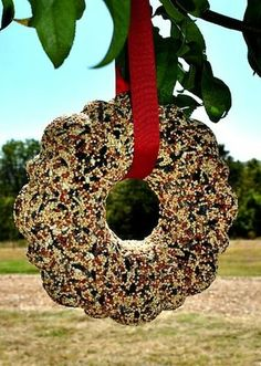 grapevine wreaths decorating ideas | Hang this DIY birdseed wreath , and you'll be glued to the windows ...
