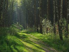 Our Summer Forest by Wirikos.deviantart.com on @DeviantArt