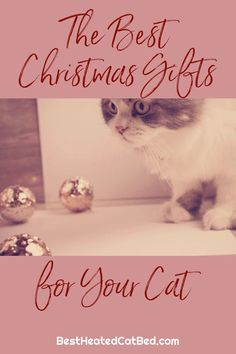 As you pick out presents for family and friends, remember to include your favorite feline on your gift-giving list. If you are stumped for what to get your kitty this year, we can help! We have rounded up the best Christmas gifts for cats so you can spoil your kitten this holiday season.