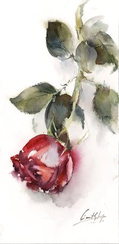 Single Red Rose Original Watercolor Painting, Rose Painting, Rose Art, Painting of Rose, Flower painting One of A Kind Art Work Size: 6x11.8 (15x30 cm) Medium: Top branded watercolor paints on Arches water color cold press paper 140 lb (300g) Signed front and back Dated on the back. Not