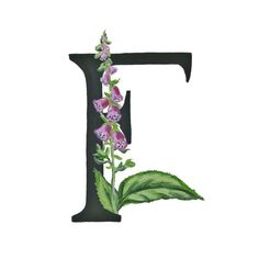 A flower for each letter of the alphabet.  These prints are great for spelling out a full word, name or initials and make beautiful framed art. This