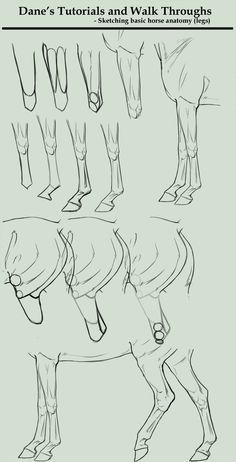 Tutorial/Walk Through - sketching horse legs