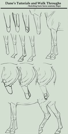 Tutorial/Walk Through - sketching horse legs by AgerskovArt.deviantart.com on @deviantART