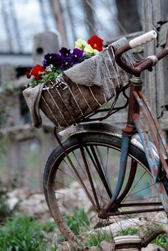 Flowers in an old retro bike basket. Bicycle Basket, Old Bicycle, Bicycle Art, Old Bikes, Bike Baskets, Bicycle Decor, Bicycle Wheel, Dirt Bikes, Color Splash