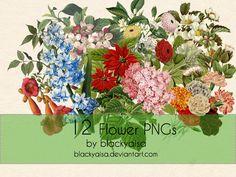 Flower PNGs: 16 by blackyaisa http://blackyaisa.deviantart.com/art/Flower-PNGs-16-452006757