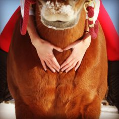 Perfect christmas picture with horse