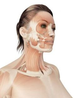 Zaručene o 5 rokov mladšia iba za 2 týždne - Tvárová gymnastika - FaceFit Košice Muscles Of The Face, Face Anatomy, Face Yoga, Face Massage, Health Advice, Organic Beauty, Beauty Women, Health And Beauty, Beauty Hacks