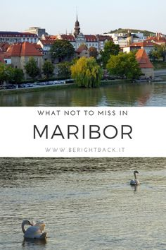 While Lubiana, a city I madly love, gives the impression to be even too perfect, Maribor strikes for its authenticity, for those contrasts that make it unique. In my opinion, it is a must if you want to learn more about Slovenia and its culture. #maribor #stiria #slovenia