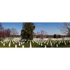 Headstones in a cemetery Arlington National Cemetery Arlington Virginia USA Canvas Art - Panoramic Images (36 x 13)