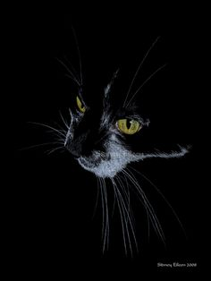 """Yellow Eyes"" Colored pencil on black paper, 6""x8"". Limited edition giclee prints."