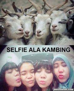Selfie ala kambing - #GambarLucu #MemeLucu - http://www.indomeme.com/meme/selfie-ala-kambing/