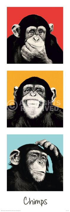 Medium Poster  The Chimp - pop  art.no. 22079  91x30cm  € 4,99