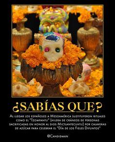"""#Curiosidades Al llegar los españoles a #Mesoamerica sustituyeron rituales como el #Tzompantli (hilera de cráneos de personas sacrificadas en honor al dios #Mictlantecuhtli) por #Calaveras de #Azucar para celebrar el """"Día de los #FielesDifuntos""""  @Candidman"""