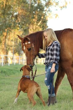 Canine- Equine Dopplegangers: 37 Horses that Have Matching Dogs! - Amateur Equestrian
