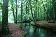 Mosegard Forest in Denmark - looks magical Want a great travel experience for your Mom?  Check this out.
