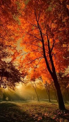 Fall Foliage at peak! Love the Fall Foliage! Fall Pictures, Pretty Pictures, Fall Pics, Autumn Scenes, All Nature, Belle Photo, Beautiful Landscapes, Beautiful World, Stunningly Beautiful