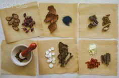 Los Beneficios de la Hierbas Medicinales