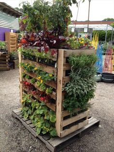 vertical garden out of pallet wood