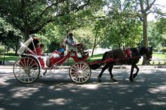 Horse-drawn carriage ride around Central Park